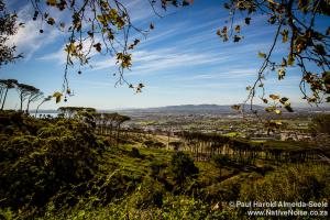 rondebosch view